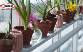 El poder de las plantas en tu hogar