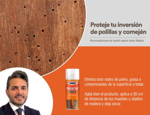Proteje tu inversión de polillas y comején